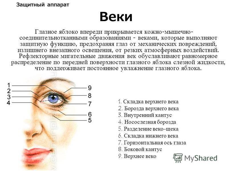 Строение глаза человека | анатомия глаза (картинки и схемы)