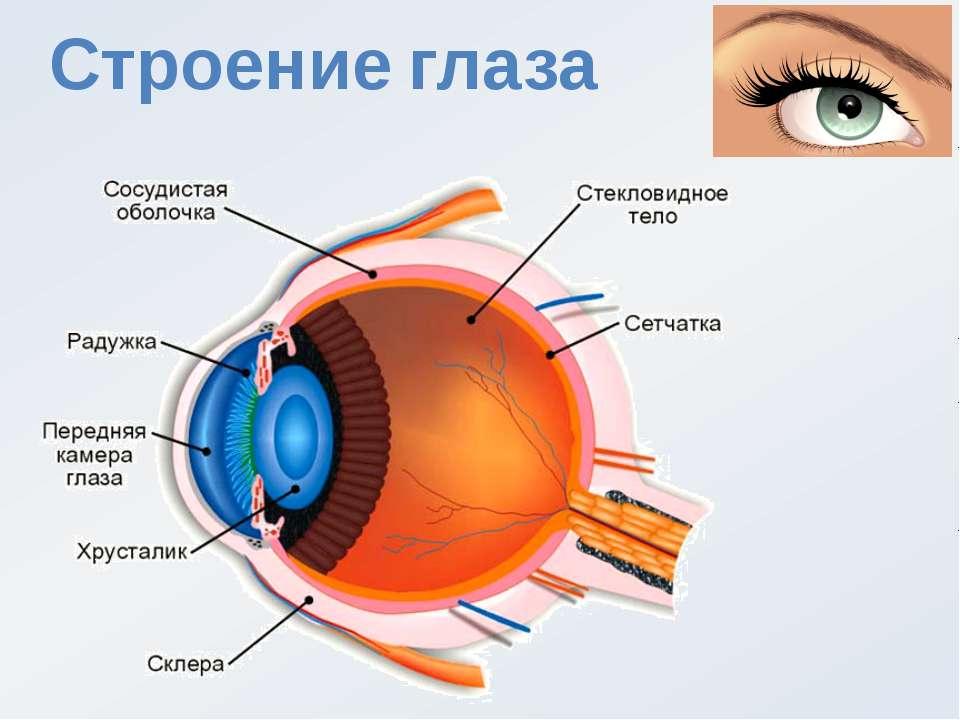 Белая точка в глазу: причины образования и методы лечения. офтальмологические заболевания  — медиамедик