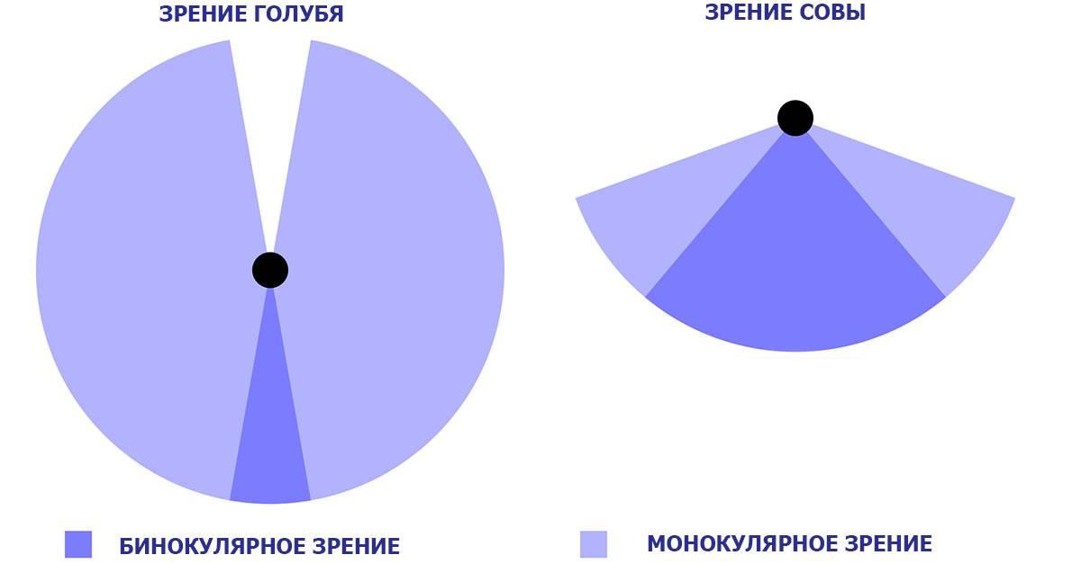 Бинокулярное зрение: что это такое, характер монокулярного у человека, бинокулярность простыми словами, определение, как проверить