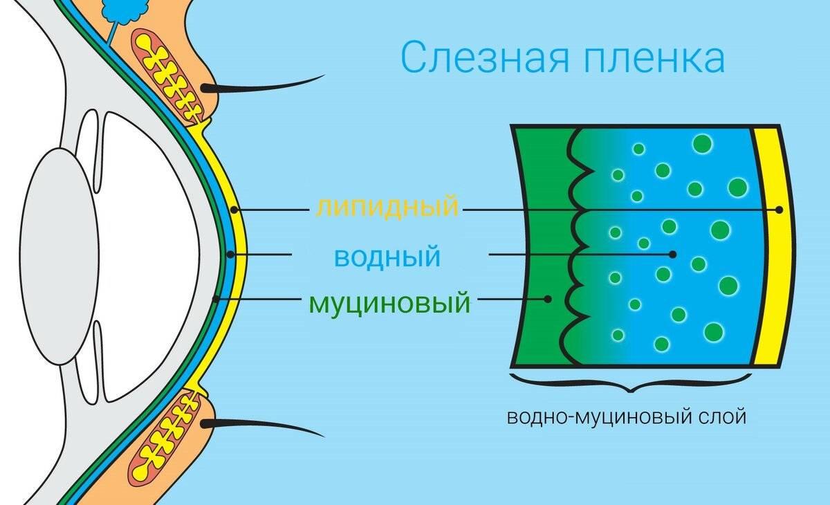 Синдром сухого глаза: симптомы и лечение (капли, народные средства, операция)