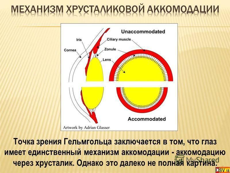 Аккомодация глаза — большая медицинская энциклопедия
