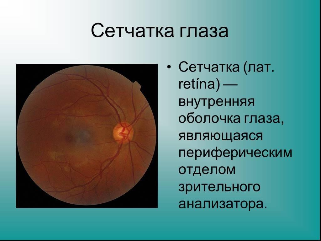 """Зрительный нерв: строение, функции, заболевания - """"здоровое око"""""""