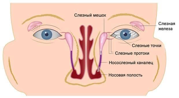 Массаж при дакриоцистите новорожденных: как правильно делать, схема проведения процедуры на глазах, эффект лечения