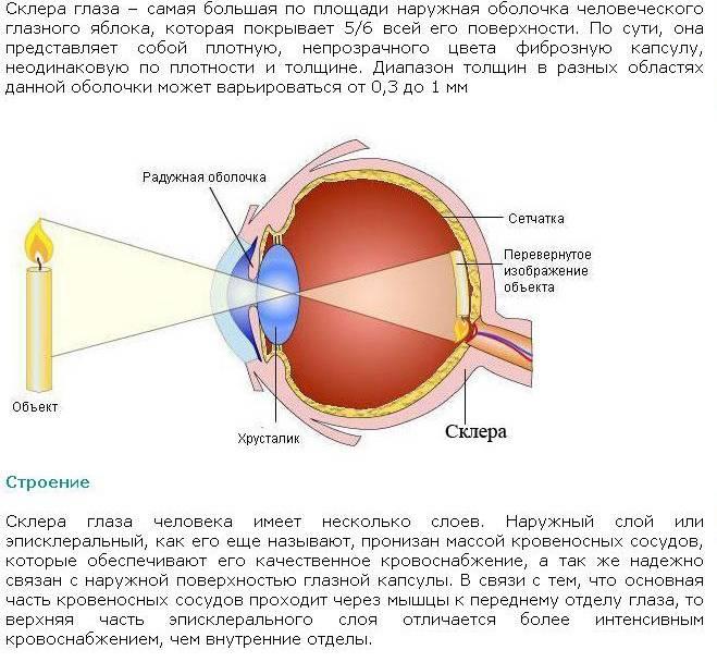 """Строение глаза человека - основные отделы глаза и их функции, диагностика заболеваний глаз - сайт """"московская офтальмология"""""""