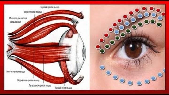 Самые эффективные капли для расслабления глазных мышц