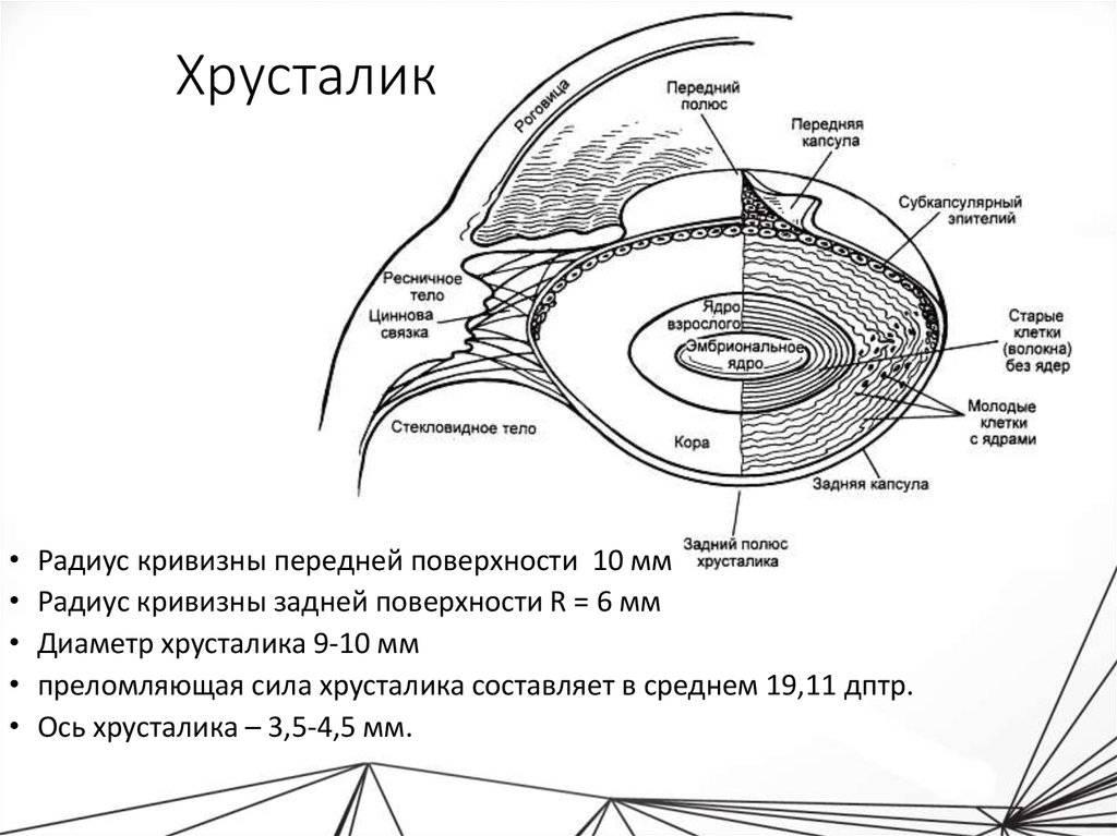 Хрусталик глаза: строение, функции, возможная патология и ее лечение