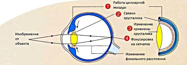 Астенопия или зрительная утомляемость, симптомы, лечение. глазные болезни - vseozrenii.