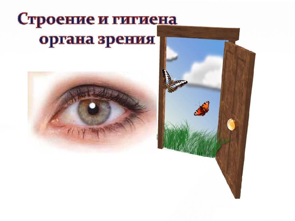 Гигиена зрения. предупреждение глазных заболеваний. выполнила : учитель биологии члалян любовь амаяковна. - презентация