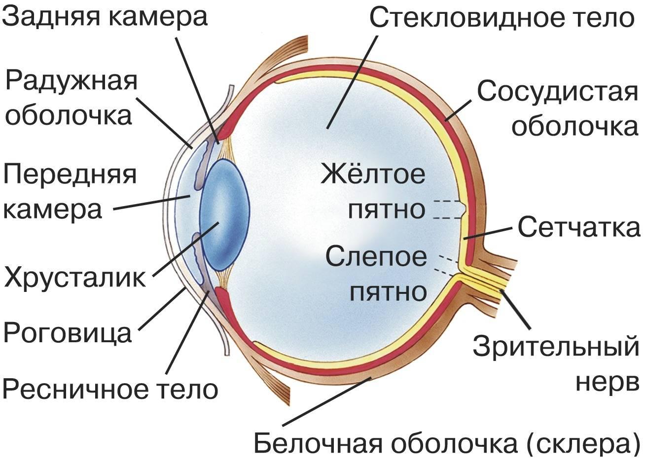Меняется ли с возрастом размер глаз человека и почему это происходит?