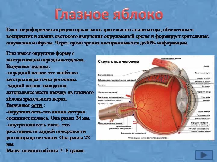 Описание основных видов глаз у человека — как определить форму и подробное описание