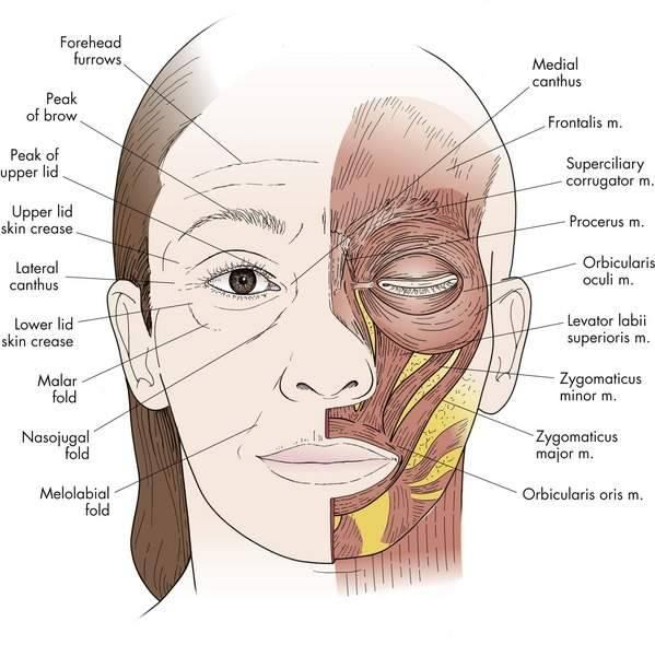 Идиопатическая лицевая миокимия                (лицевой тик)