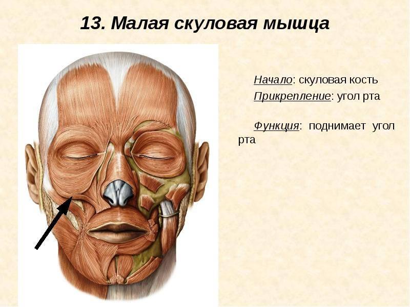 Перелом лицевой кости – причины, симптомы и лечение