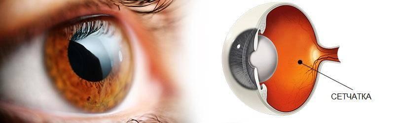 Атрофия сетчатки глаза — причины, симптомы и лечение у человека