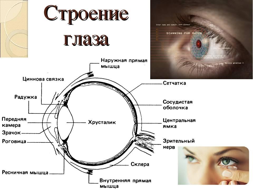 Белая точка в глазу: причины образования и методы лечения. офтальмологические заболевания