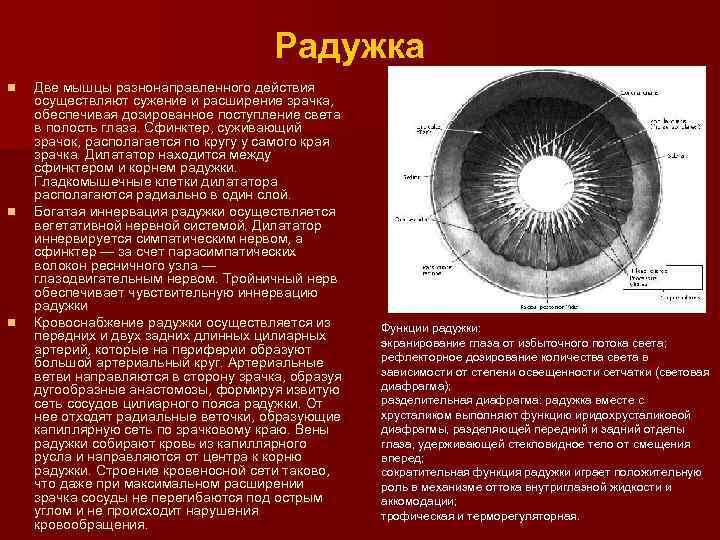 Суженные зрачки: причины, как сузить зрачки (капли для глаз и другие препараты)