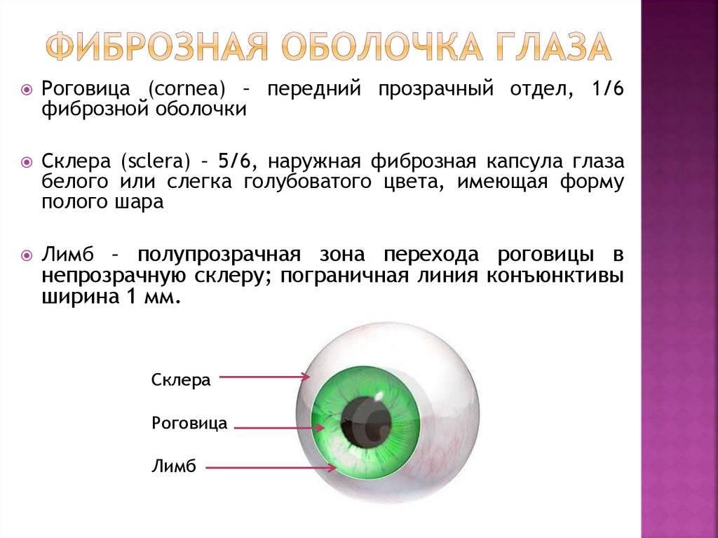 Функции и строение склеры глаза. различные виды заболеваний.