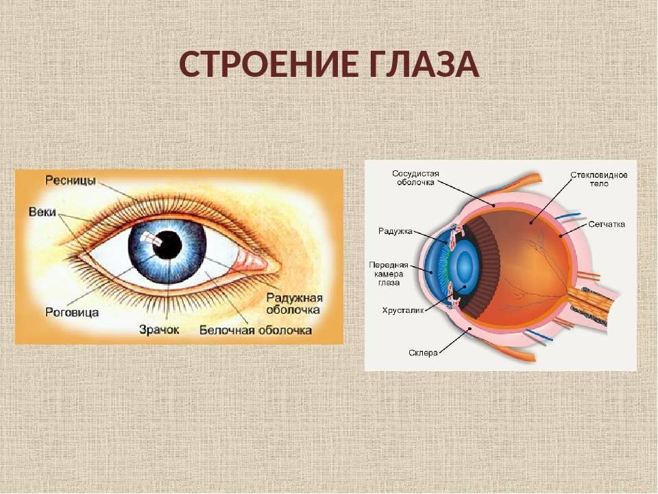 Из-за чего бывают голубыми белки глаз? симптомы, диагностика и лечение
