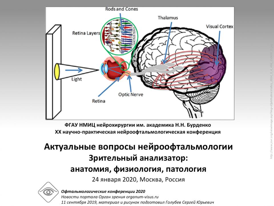 Нейроофтальмология — википедия