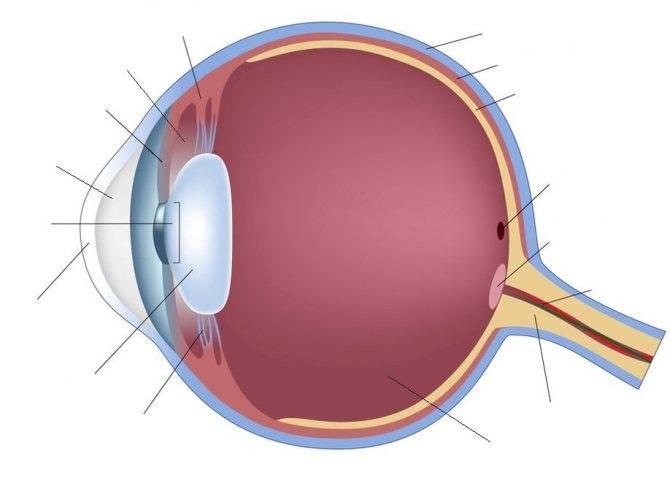 Растут ли глаза у человека - медицинский справочник