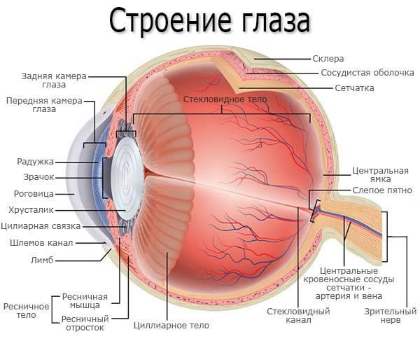 Стекловидное тело глаза: строение, функции, симптомы и лечение