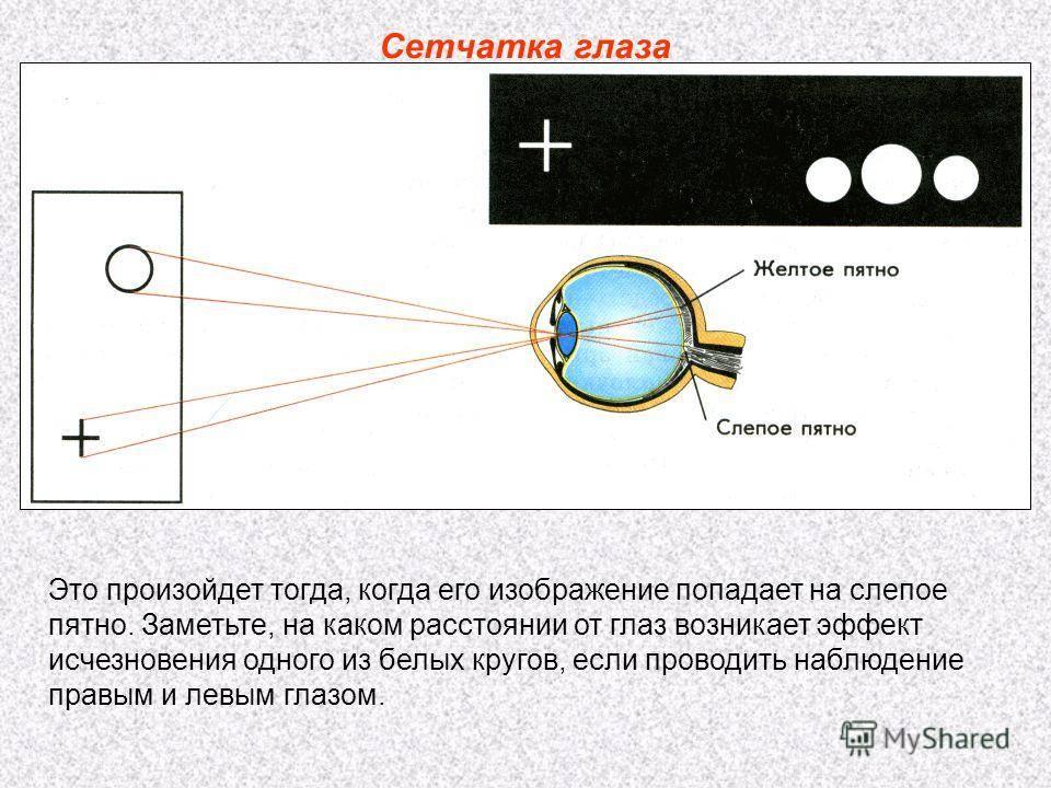Слепое пятно глаза: строение, функции, что такое слепая зона и как ее найти, тесты, диагностика, симптомы отклонений