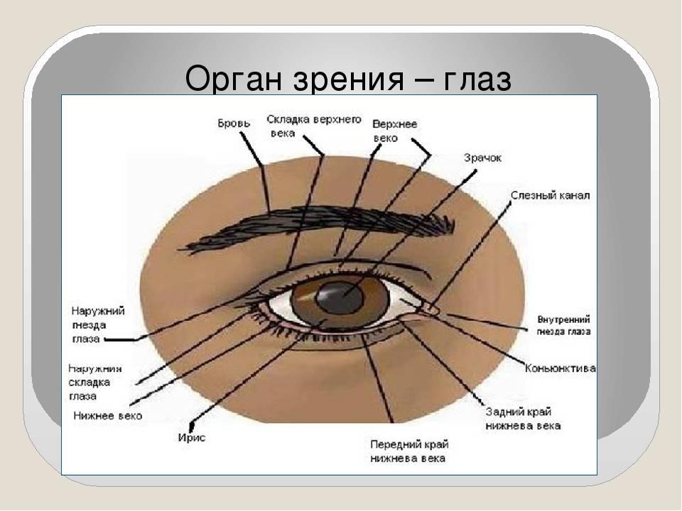 Белые глаза без зрачков
