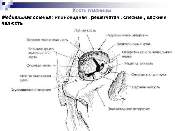 Глазница (орбита). строение, содержимое, сосуды и нервы глазницы.