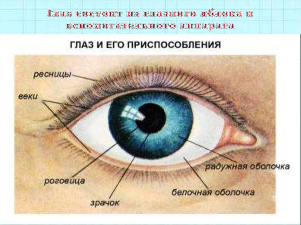 Воспаление глаза: фото, как это называется, диагнозы, название заболевания железы, халязион у ребенка, ячмень на веке от линз