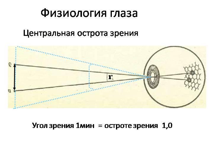 Глава 3. зрительные функции