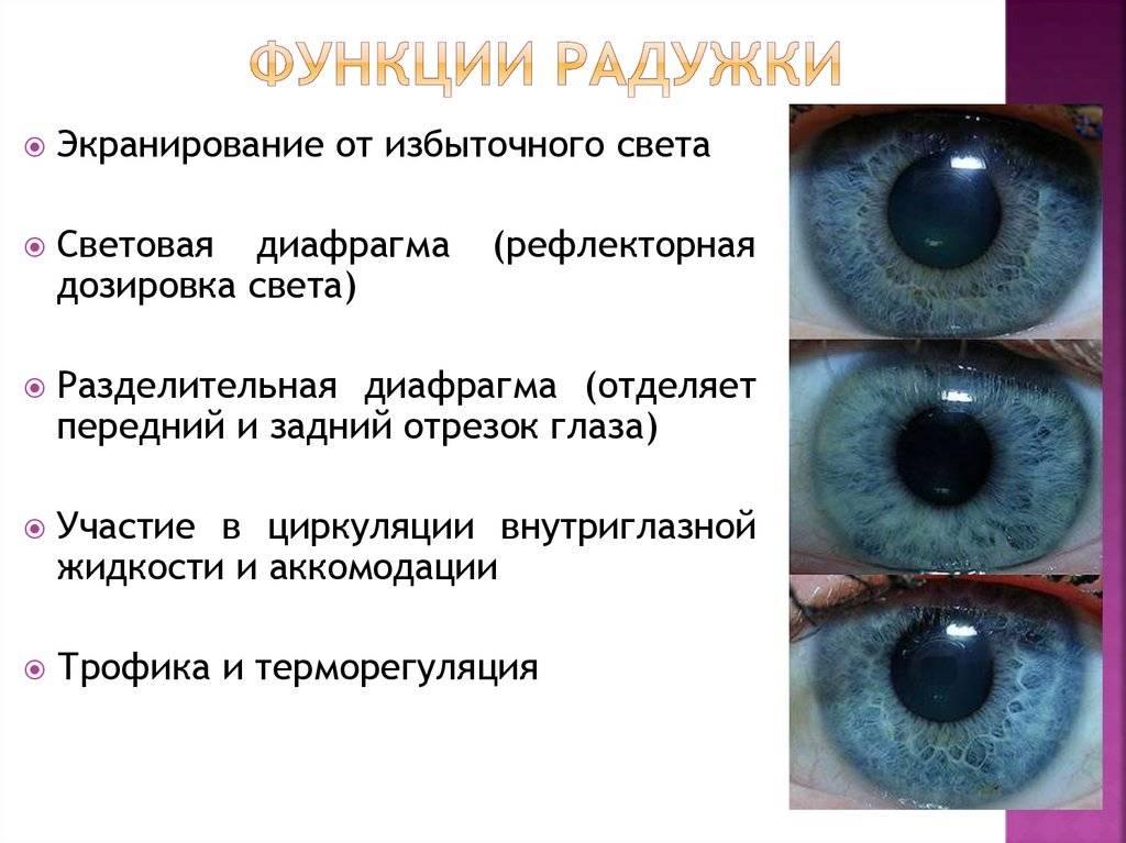"""Зрачок - строение, диагностика заболеваний - """"здоровое око"""""""