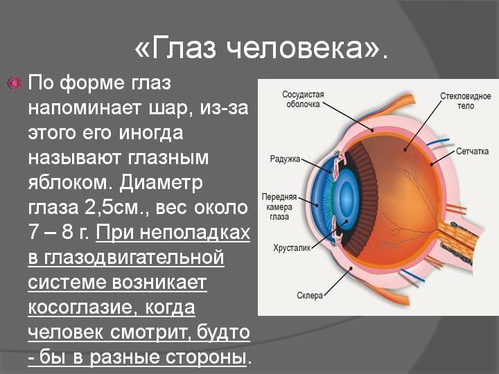 Из чего состоит глазное яблоко?