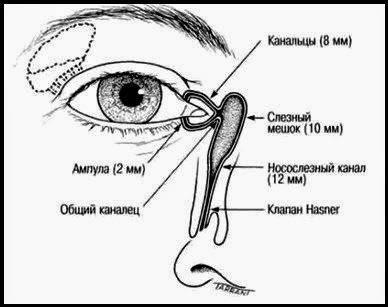 Почему слезы текут сами по себе. почему слезятся глаза | здоровье человека