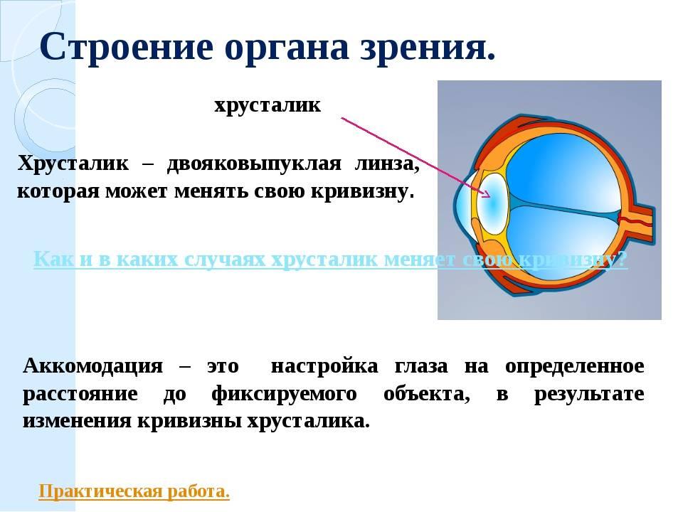 Патология хрусталика (аномалии развития, катаракта)
