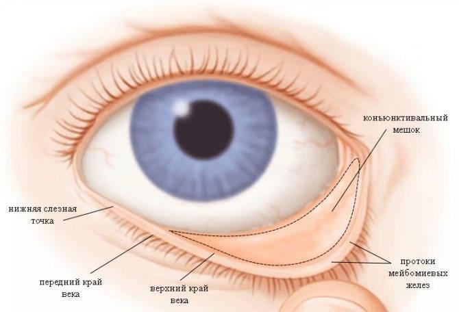 Конъюнктивальный мешок - строение, расположение в глазу человека