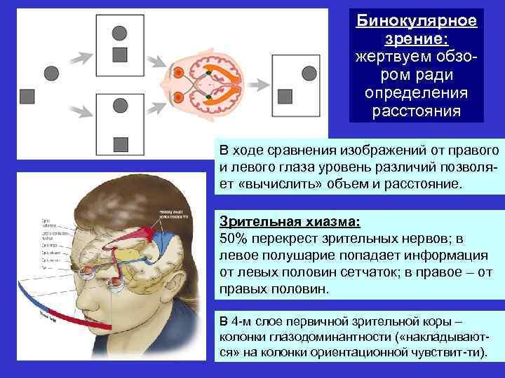 Как восстановить бинокулярное зрение при косоглазии: механизм, исследование, лечение нарушений