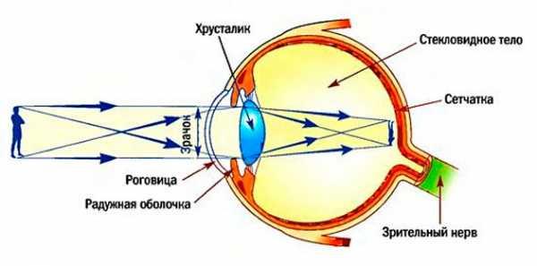 Операция на глаза при близорукости: стоимость, виды коррекции миопии (лазерная, замена хрусталика)