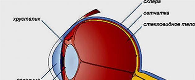 Факты о зрении или вредно ли пользоваться неправильными очками? – вредно ли носить очки?