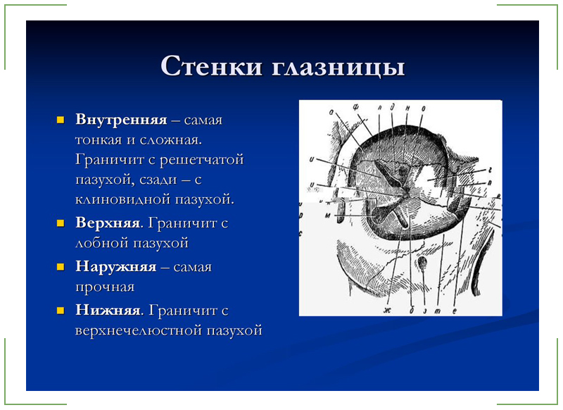 Анатомия глазницы: строение, функции