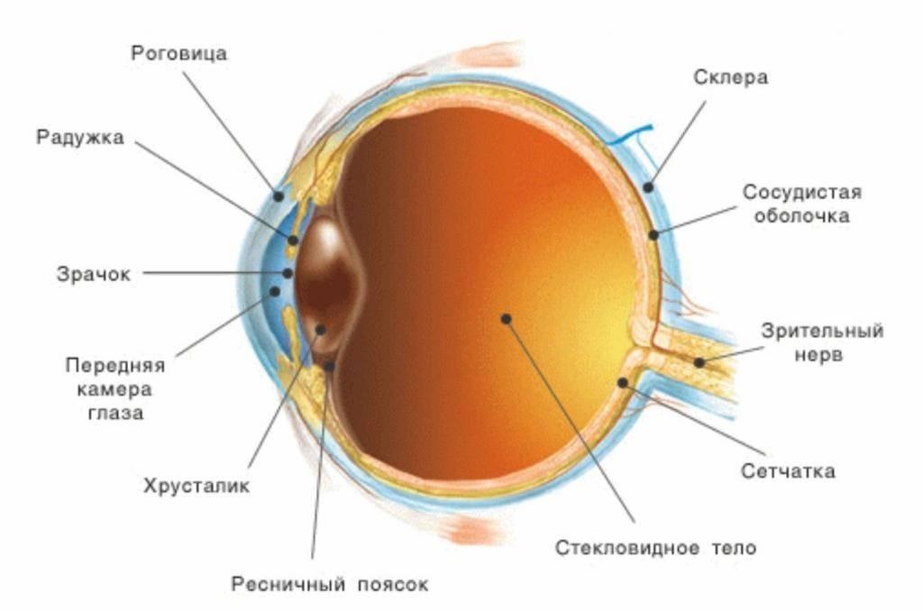 Что такое склеры глаз или белочная оболочка? синдром голубых склер