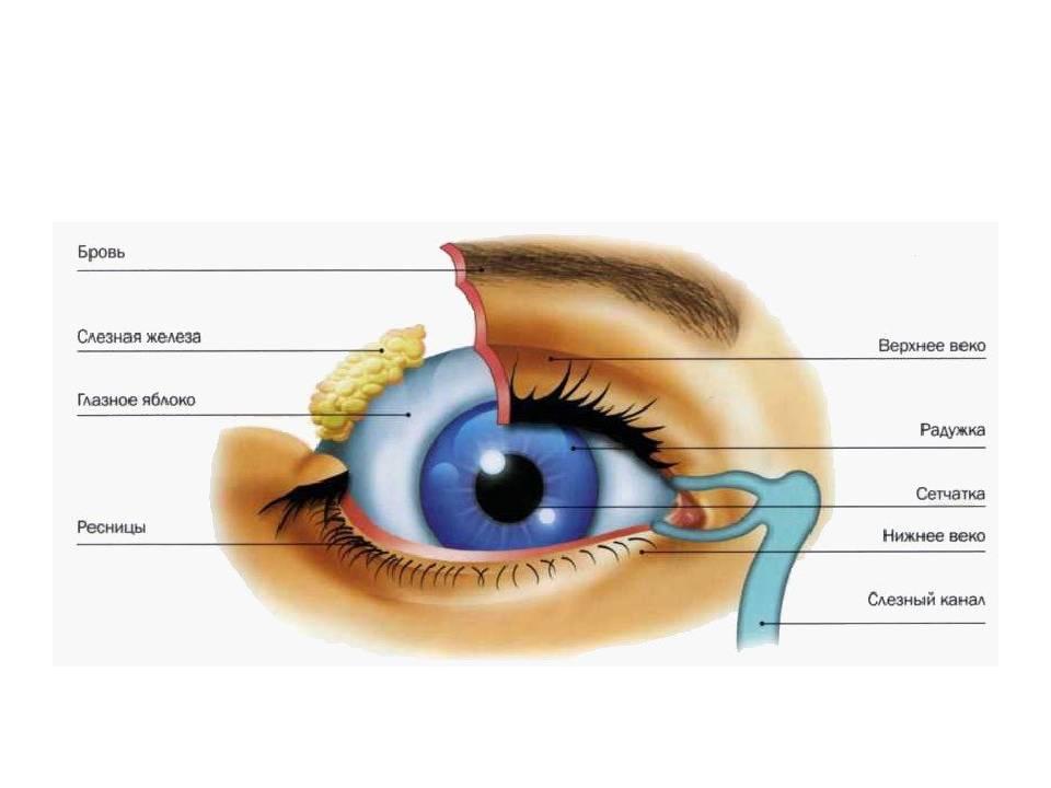 Белый налет в уголках глаз у взрослых: причины и лечение