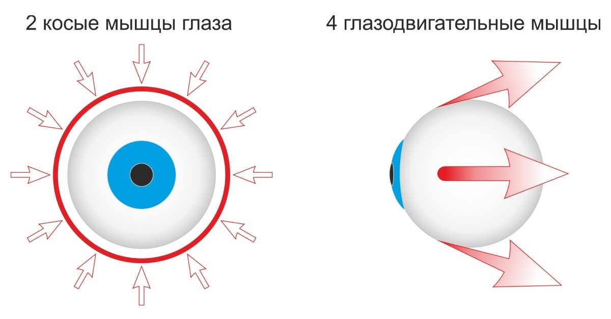Тренажер для глаз «тонус» — офтальмология