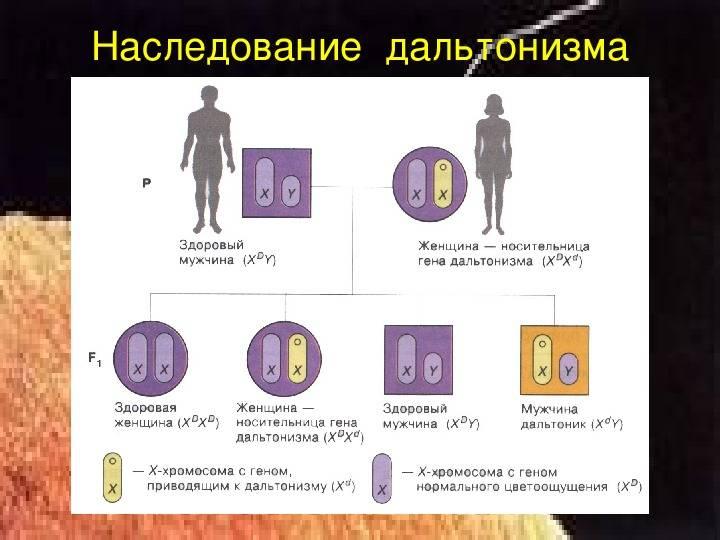 Как передается дальтонизм: пути передачи и признаки заболевания — глаза эксперт