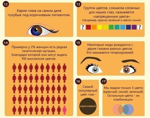 Неожиданные факты о цвете глаз: он влияет на наш образ жизни и предопределяет основные черты характера