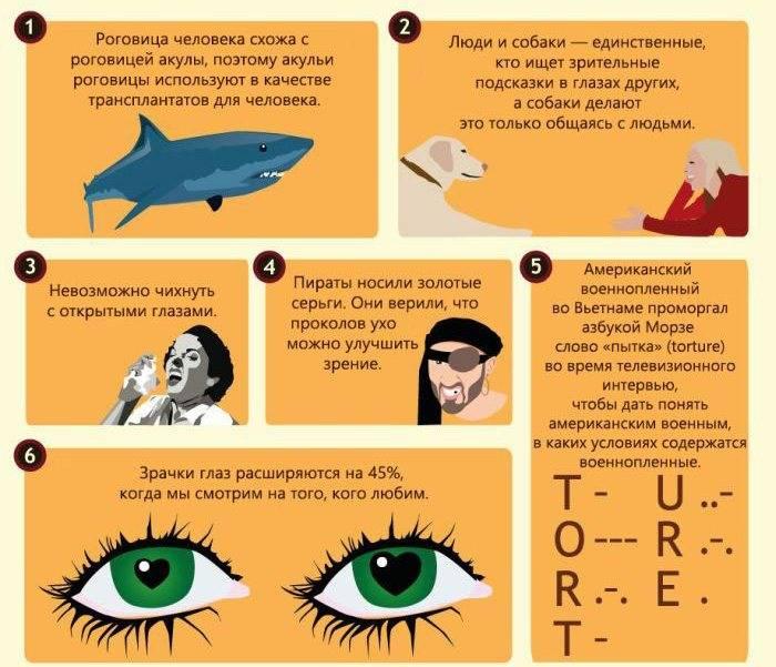 Интересные факты о глазах человека