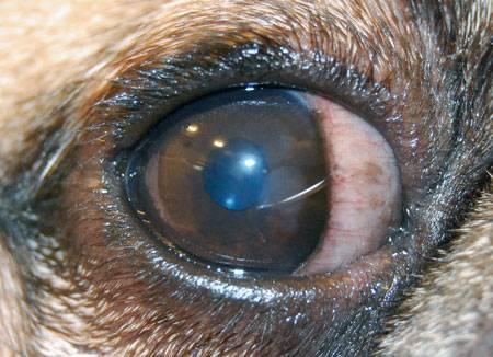 """Контузия (ушиб) глаза: симптомы и лечение, степени и негативные последствия - moscoweyes.ru - сайт офтальмологического центра """"мгк-диагностик"""""""