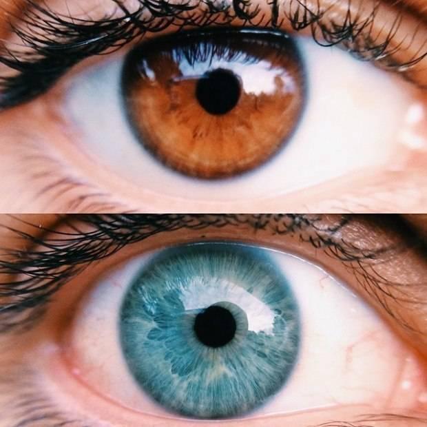 Самый редкий цвет: вся правда о зеленых глазах