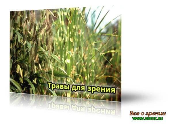 Спрашиваем офтальмолога: какие травы для улучшения зрения можно применять?