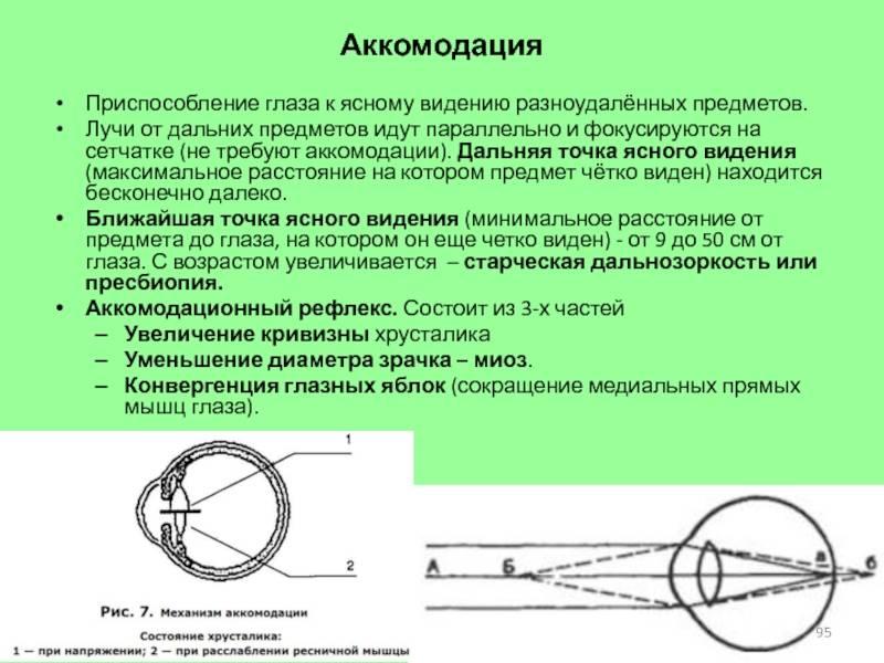 Что такое аккомодация глаза у человека oculistic.ru что такое аккомодация глаза у человека