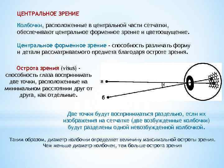 Определение понятие слепоты, теоретическая и практическая слепота.