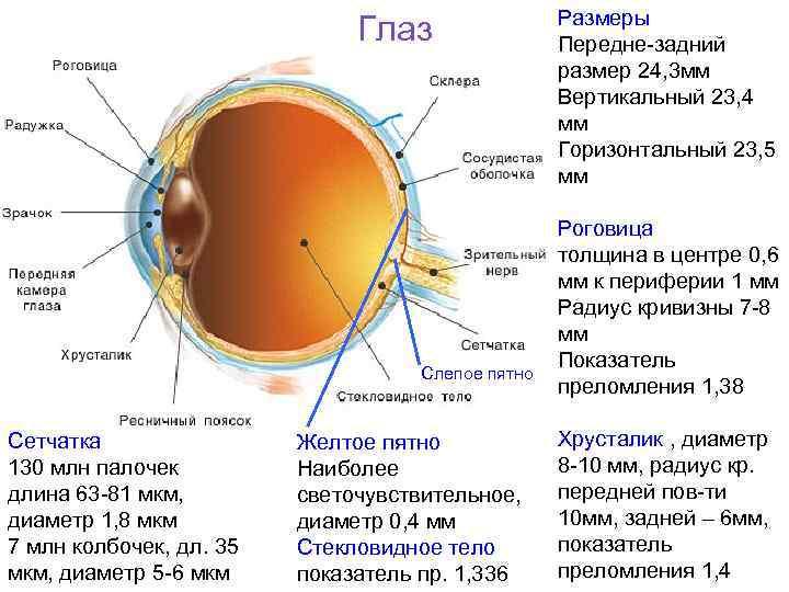Слепое пятно — википедия. что такое слепое пятно